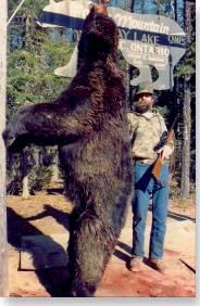 Giant black bear