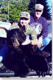 black bear in Maine