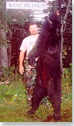 Bear from Maine's West Branch region