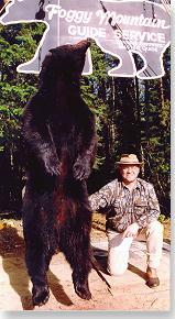 Bear in Maine's Katahdin region