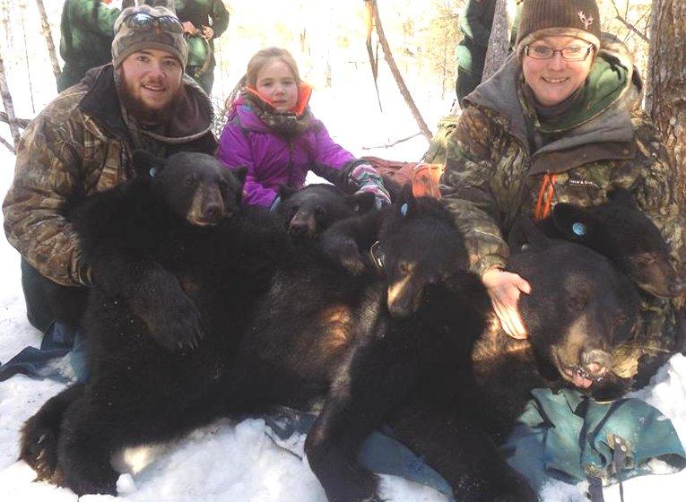 Maine bear reserch
