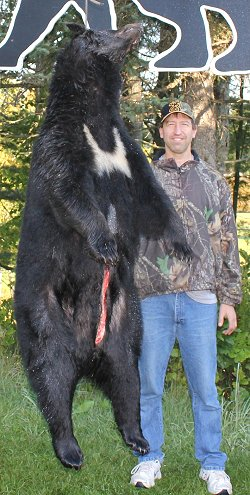 trophy black bear hunt at Foggy Mountain