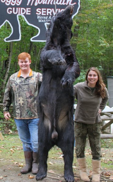 Trophy bear over 400 pounds at Foggy Mountain