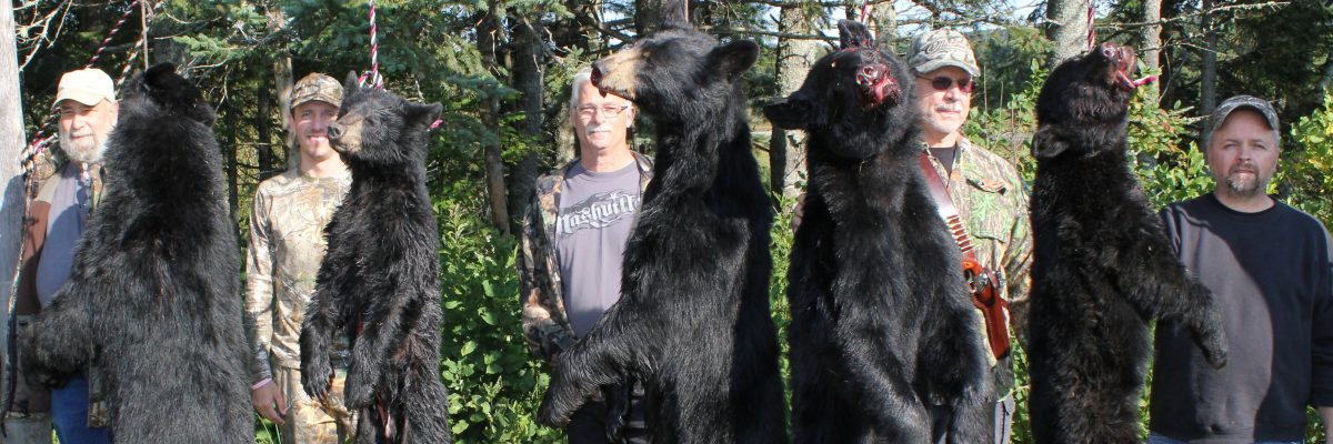 Maine bear hunts with Foggy Mountain Guide Service