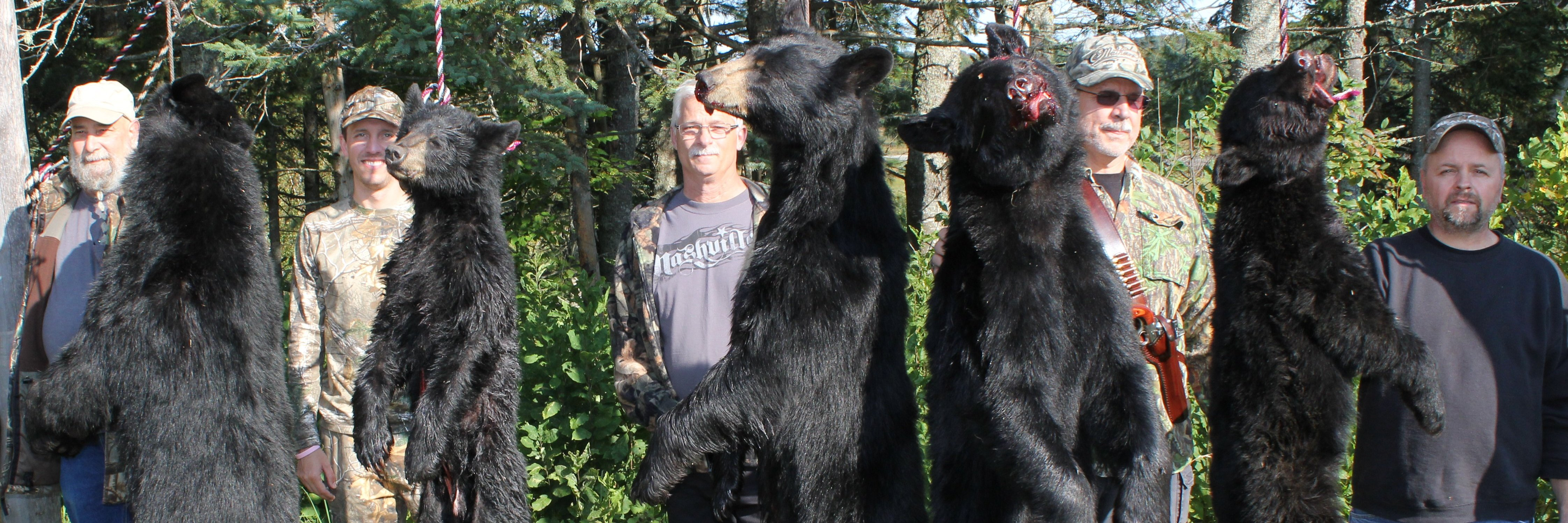 Black Bear Hunts In Maine Foggy Mountain Guide Service