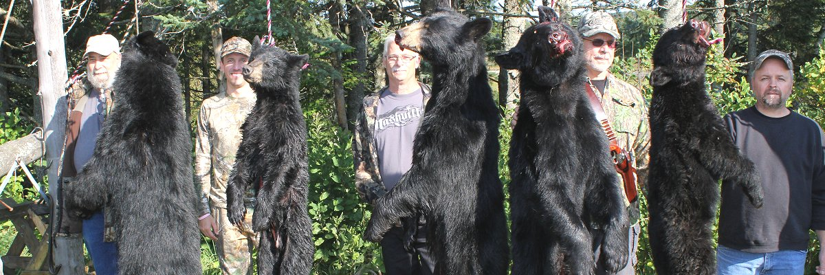Bear Hunting at Foggy Mountain